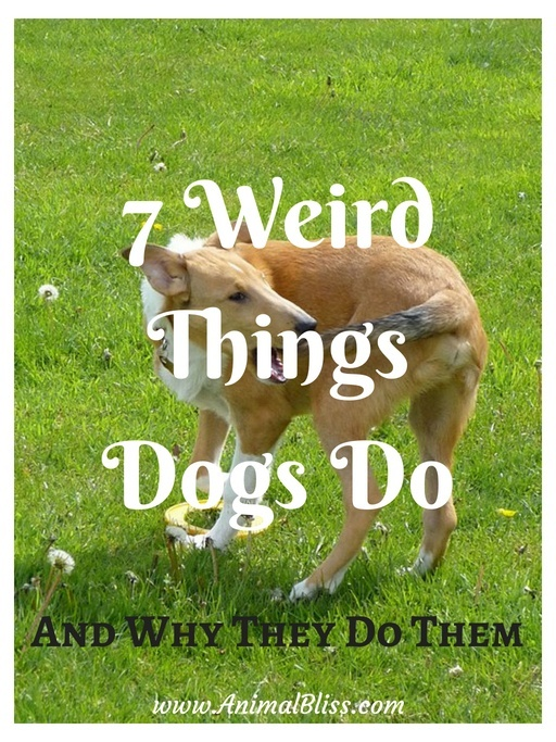 7 Weird Things Dogs Do (and Why They Do Them)