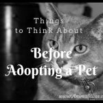Things to Think About Before Adopting a Pet