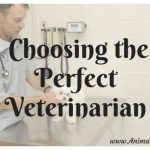 What To Look For When Choosing The Perfect Veterinarian