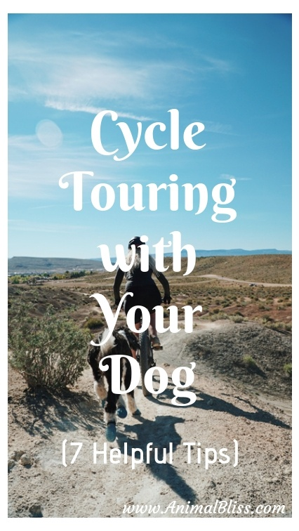 Cycle Touring with Your Dog - 7 Helpful Tips