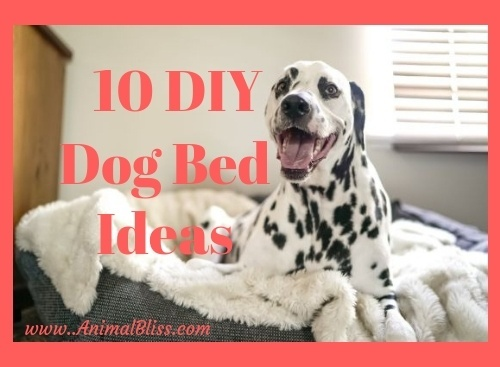10 DIY Dog Bed Ideas to Create Sweet Doggy Dreams