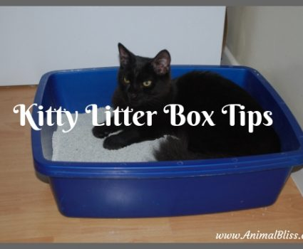 Kitty Litter Box Tips You Should Have Known Earlier