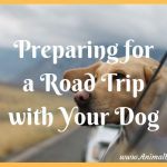 Preparing for a Road Trip with Your Dog