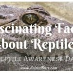Fascinating Facts About Reptiles – Reptile Awareness Day