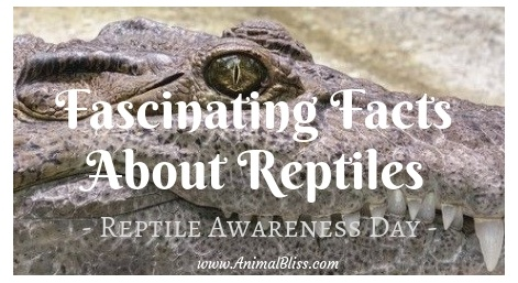 10 of the most fascinating facts about reptiles, Reptile Awareness Day, October 21