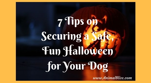 7 Tips on Securing a Safe and Fun Halloween for Your Dog