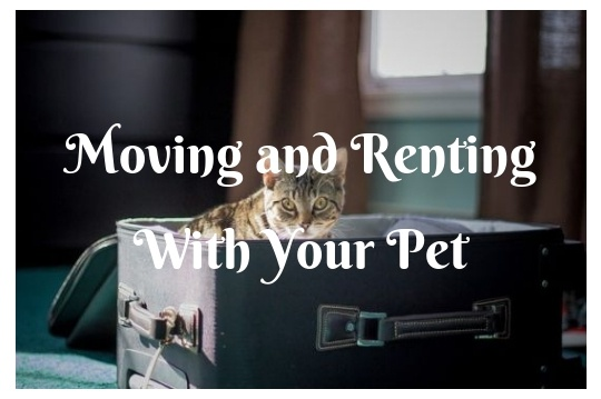 A Guide on Moving and Renting With Your Pet