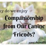 Why do we Enjoy Companionship from our Canine Friends?