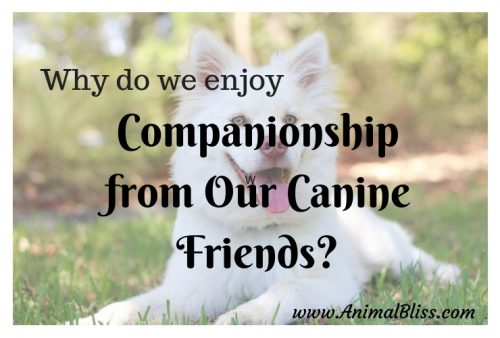 Companionship From Our Canine Friends