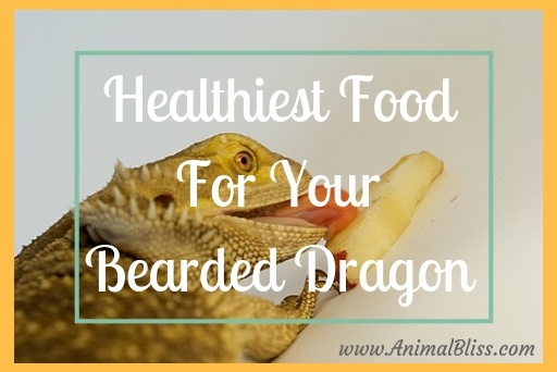Healthiest Food for your Bearded Dragon