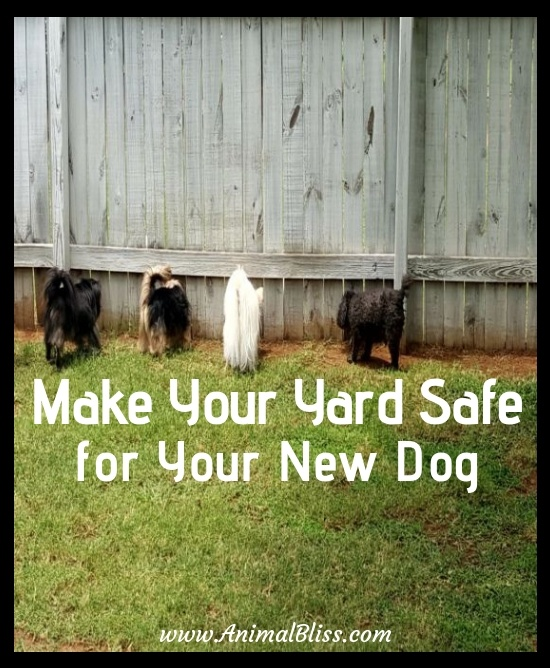 Steps to Make Your Yard Safe for Your New Dog