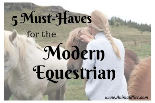 5 Must Haves for the Modern Equestrian for Top Performance
