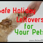 Safe Holiday Leftovers for Your Pet Infographic