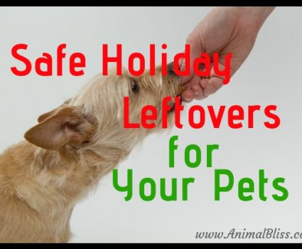 Safe Holiday Leftovers for Your Pets