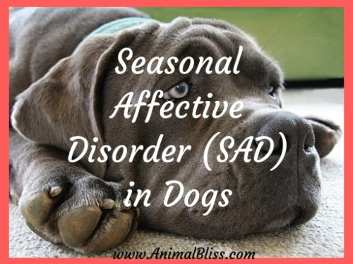 Seasonal Affective Disorder in Dogs: Do Dogs Get Winter Blues?