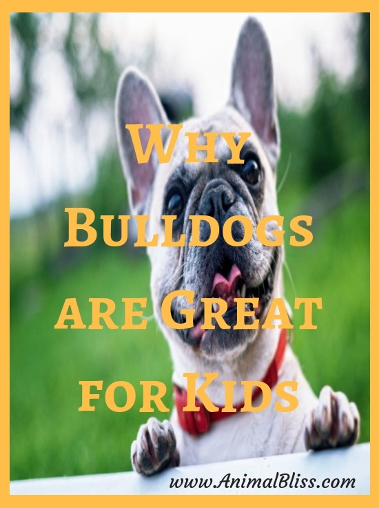 Myth busted! Why Bulldogs are Great for Kids
