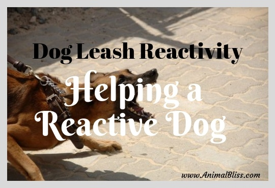 Dog Leash Reactivity: 5 Tips for Helping a Reactive Dog