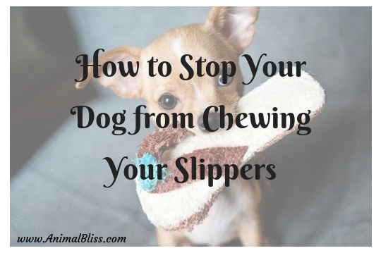 How to Stop Your Dog from Chewing Your Slippers