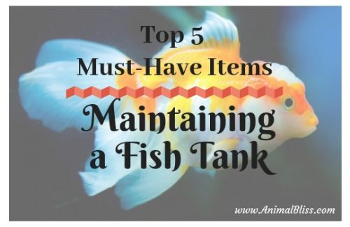 Top 5 Must Have Items for Maintaining a Fish Tank