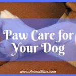 Paw Care for Your Dog – Everything You Need to Know