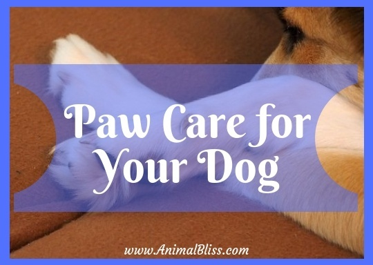 Paw Care for Your Dog - Everything You Need to Know