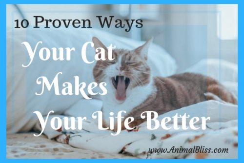 10 Proven Ways Your Cat Makes Your Life Better