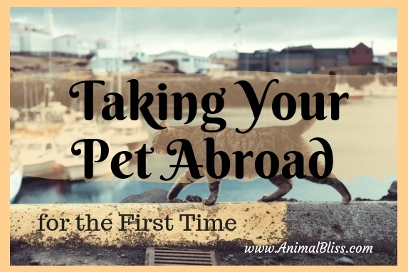 A Complete Guide to Taking Your Pet Abroad for the First Time