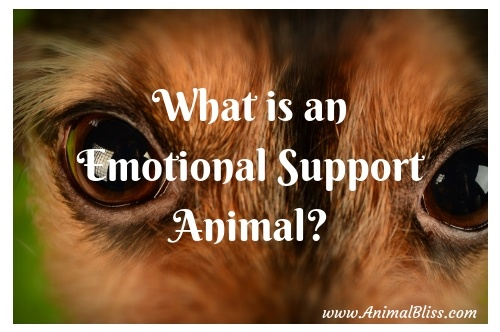 What is an Emotional Support Animal (ESA)?