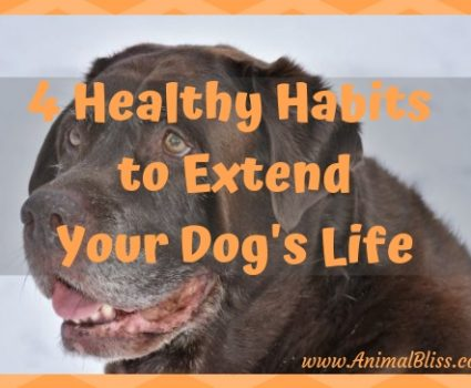 4 Healthy Habits to Extend Your Dog's Life