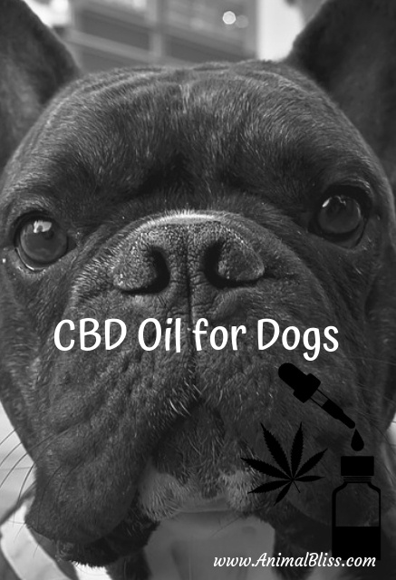 CBD Oil for Dogs: Guidelines and Dosage Guide