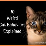 10 Weird Cat Behaviors Explained. Is Your Cat Okay? Probably