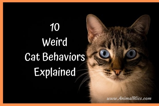 10 Weird Cat Behaviors Explained. Is Your Cat Okay? Probably.