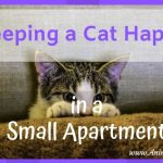 5 Tips for Keeping a Cat Happy in a Small Apartment