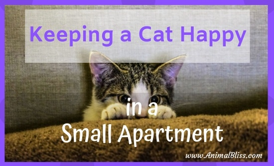 Keeping a cat happy in a small apartment is not difficult. Following these 5 tips will ensure your cat stays content to be your companion.
