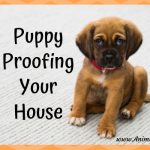 Puppy-Proofing Your House Before Bringing a Puppy Home