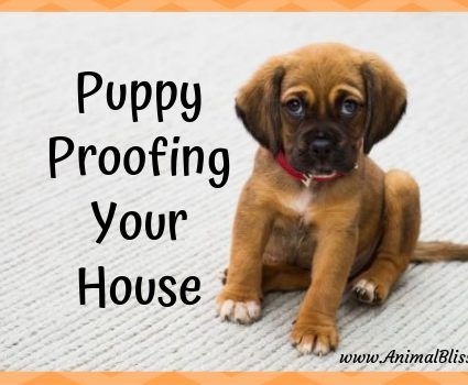 Puppy-Proofing Your House Before Bringing Your New Puppy Home