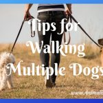 Tips for Walking Multiple Dogs at Once