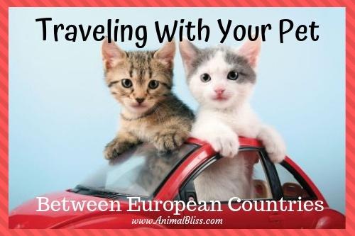 Traveling with your pet between European countries requires a little organization. Know the requirements for shots and important paperwork.