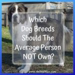 Which Dog Breeds Should The Average Person Not Own?