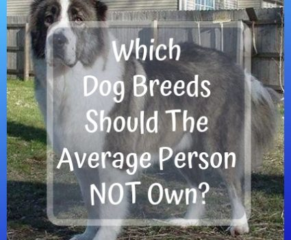 Which Dog Breeds Should The Average Person Not Own