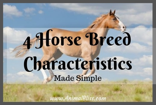 4 Horse Breed Characteristics Made Simple