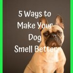 5 Ways to Make Your Dog Smell Better, Dog Grooming Tips