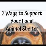 7 Ways to Support Your Local Animal Shelter