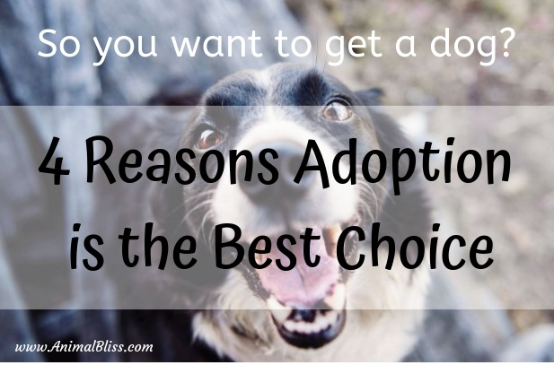 Getting a Dog? 4 Reasons Why Adoption is the Best Choice