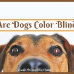 Are Dogs Color Blind? Can Dogs See Color?