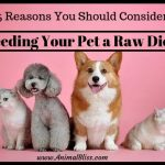 5 Reasons You Should Consider Feeding Your Pet a Raw Diet