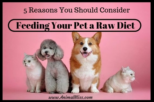 Five reasons you should consider feeding your pet a raw diet.