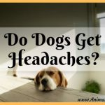 Do Dogs Get Headaches? Signs and Symptoms of Canine Headache