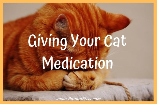 Giving Your Cat Medication: Everything You Need to Know