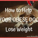How to Help Your Obese Dog Lose Weight